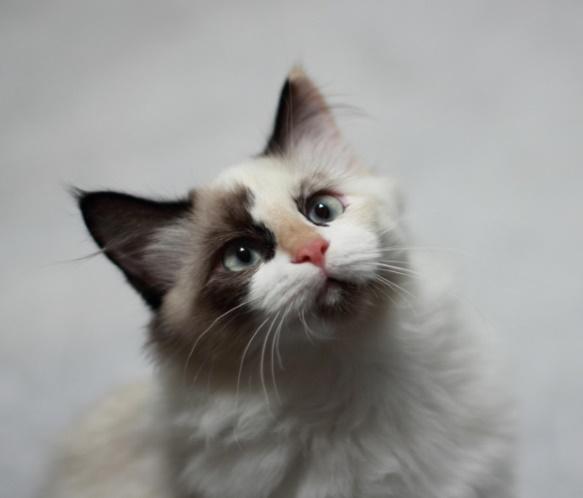 Photograph: Fluffy kitten looking up